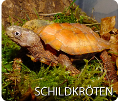 button schildkroeten