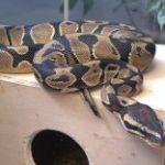 python3